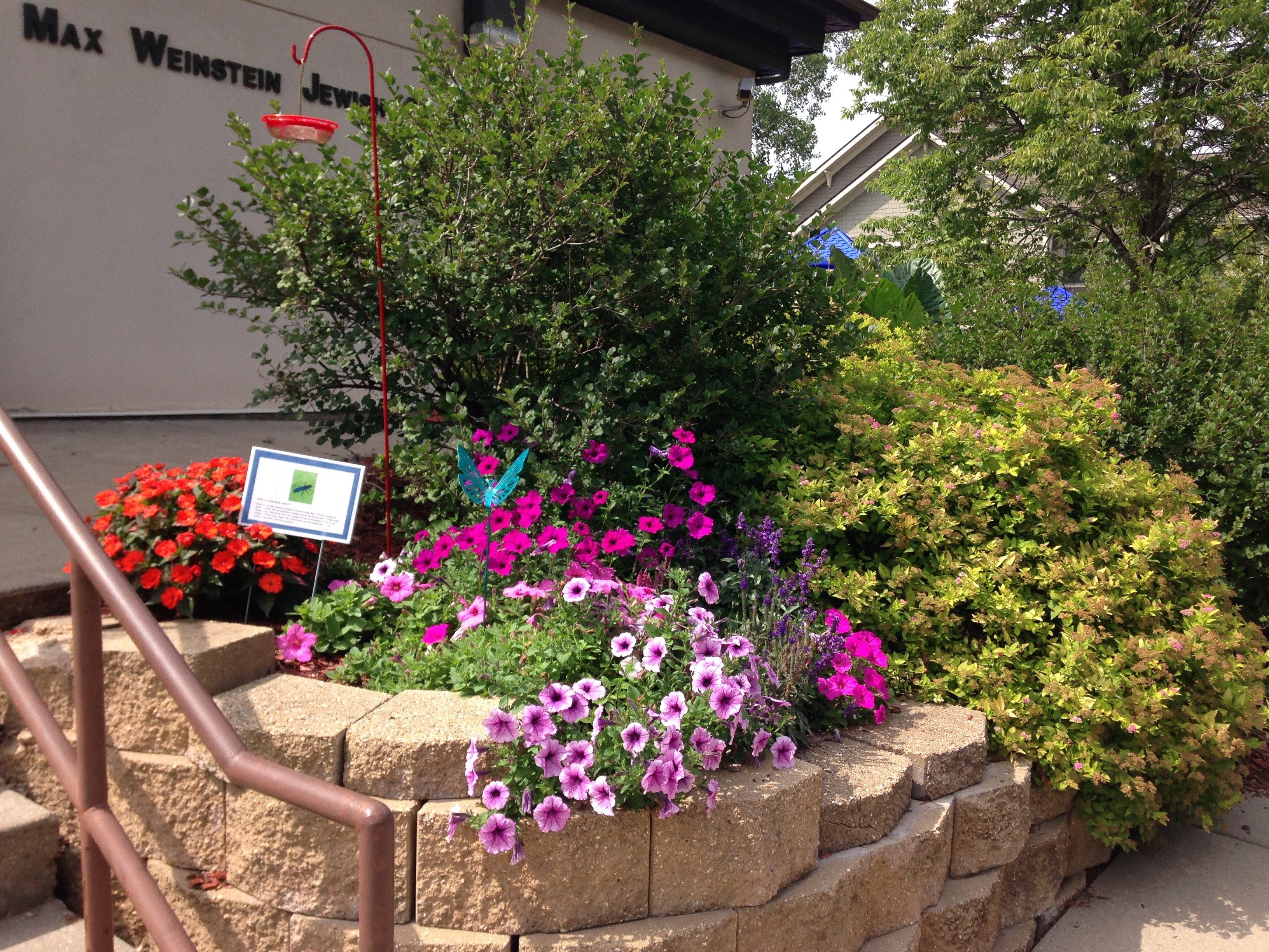 Image of the blooming garden outside the front door of JSS